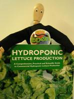 HYDROPONIC LETTUCE PRODUCTION